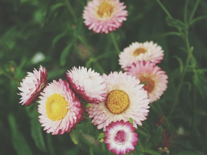 Flowerporn Flower Flowers Garden