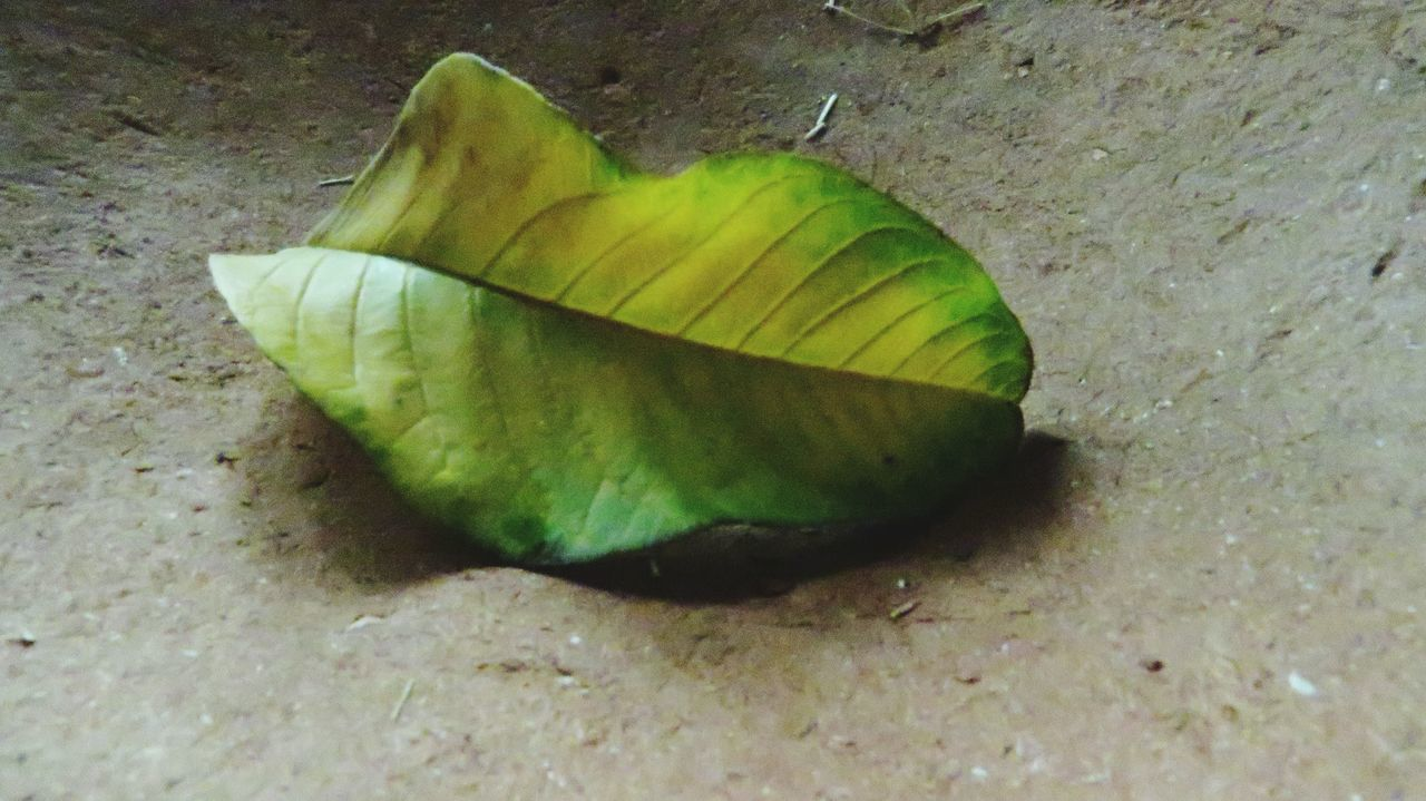 leaf, day, high angle view, change, close-up, no people, nature, autumn, outdoors, green color, fragility, beauty in nature