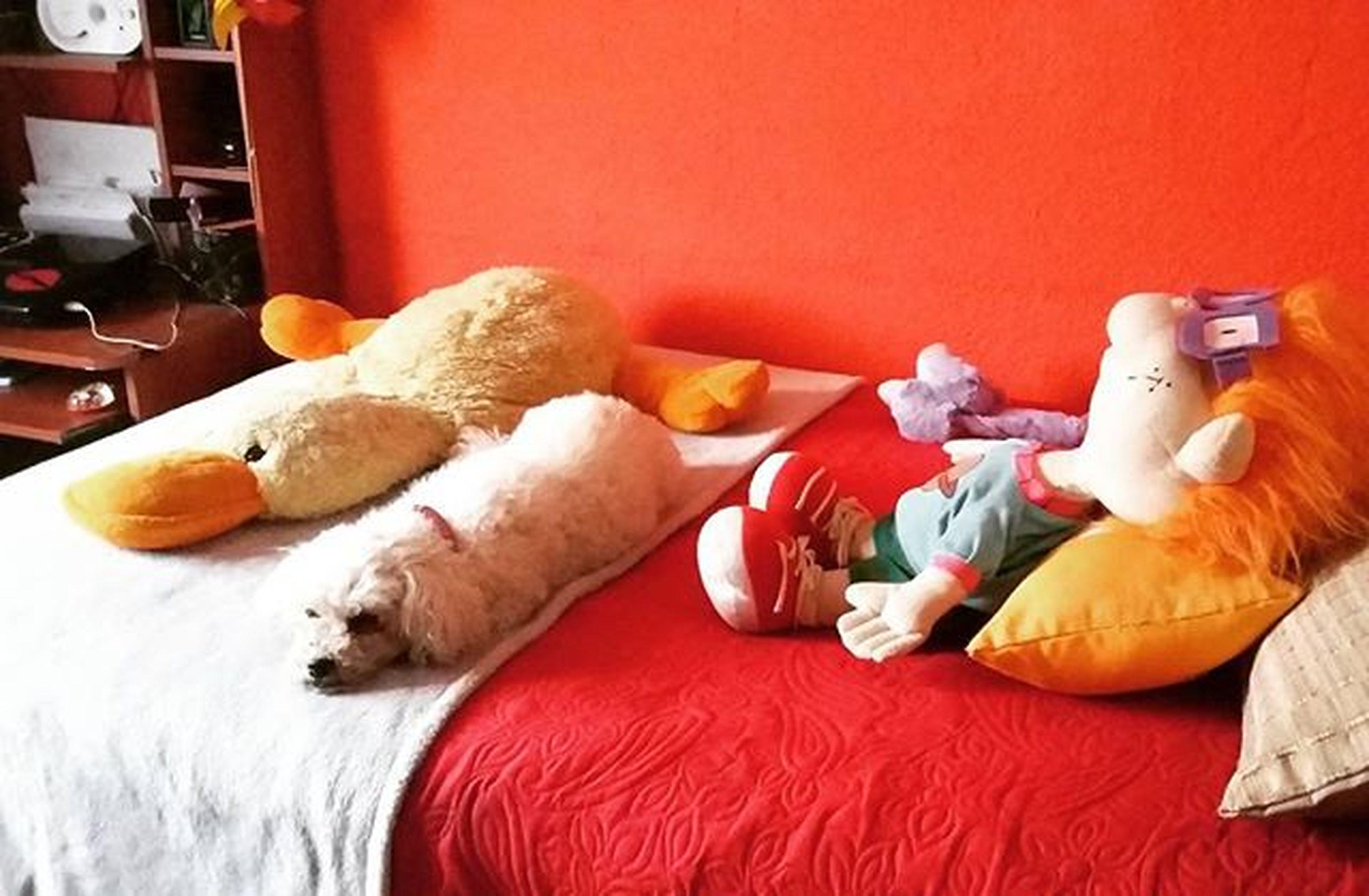 Anda a trabajar nomas 😸 yo te cuido la cama 🐩 Gabiconataquedeamor Tempranito Camuflada Migordabella 14añitos Gabilovers 💜