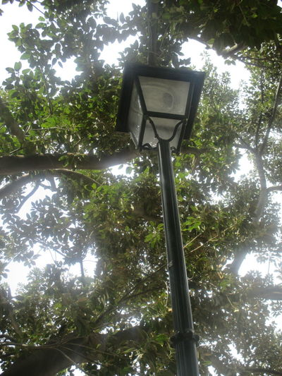 #branches #daylight #game Of Lights #lights #park #spring #spring In The Park #springtime #streetlapm And The Tree Branch Day Green Color Green Color Growth Highness Leaf Light Through The Trees Low Angle View Nature No People Outdoors Sky Streetlamp Streetlamp In The Park Tree