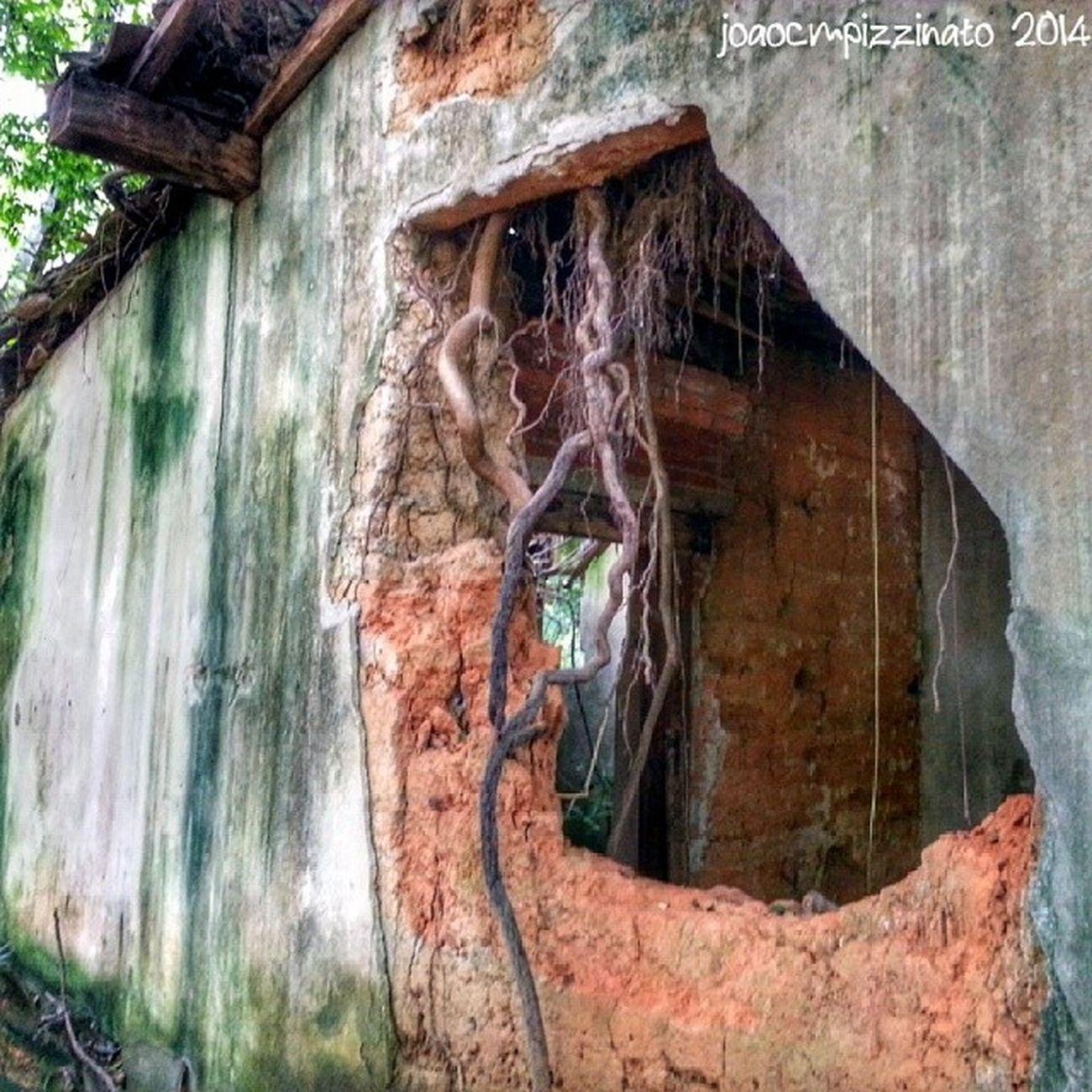 Capela de Santo Ignácio de Loyola: Local Parque Burle Marx. Chapel Ruins Nature Colors oldtime history city zonasul saopaulo brasil photography burlemarx