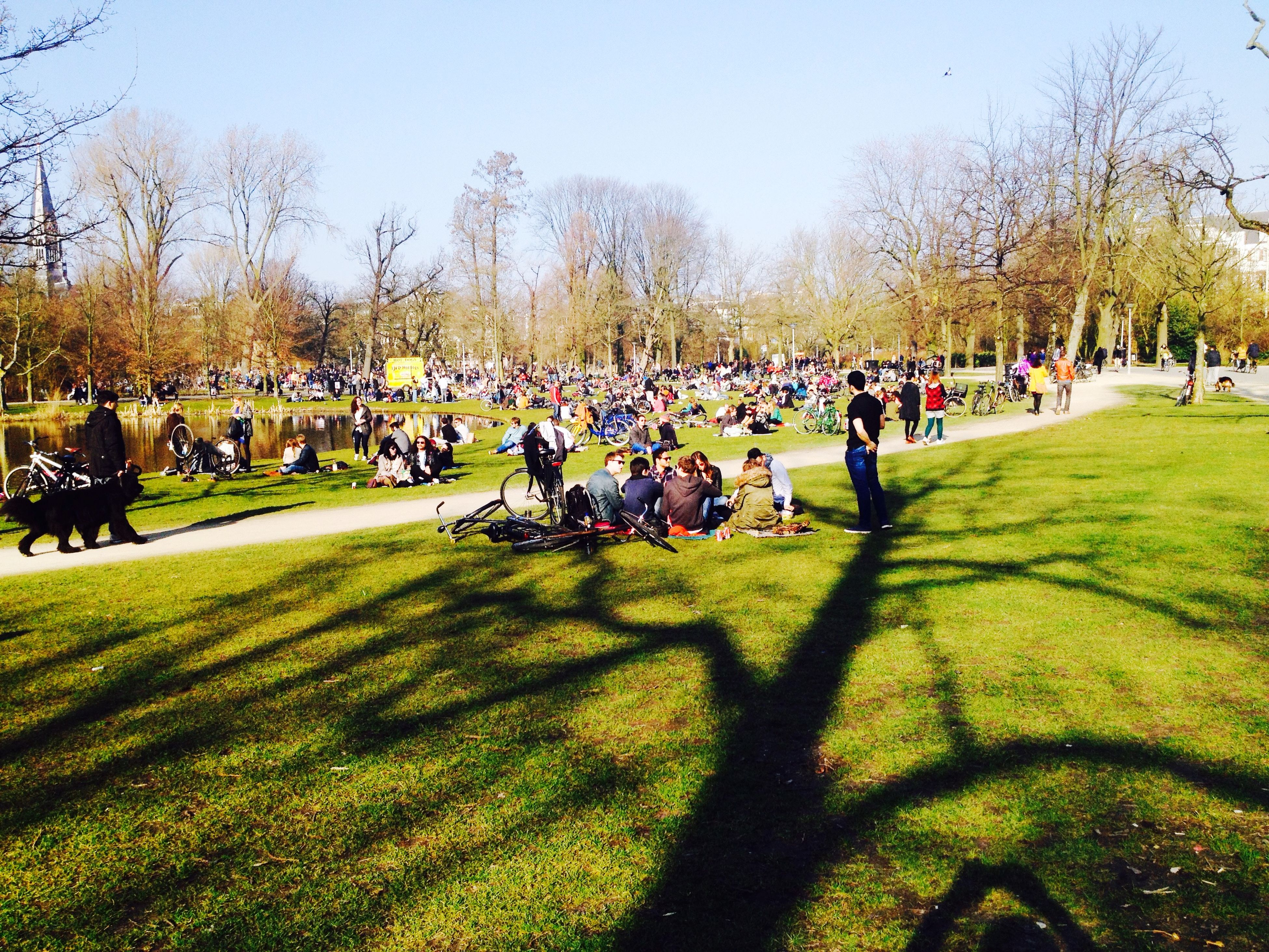 large group of people, grass, men, tree, person, leisure activity, lifestyles, park - man made space, mixed age range, green color, field, grassy, crowd, park, lawn, clear sky, sport, relaxation, group of people