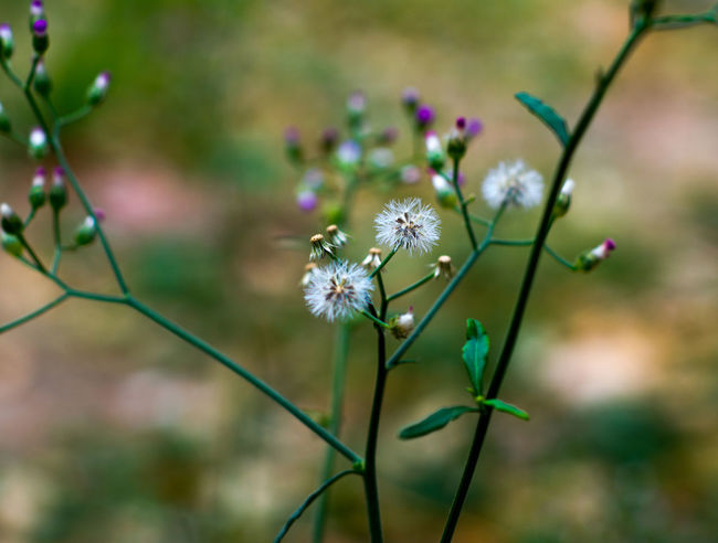 Beauty In Nature Blooming Blossom Botany Bud Close-up Day Flower Flower Head Focus On Foreground Fragility Freshness Growing In Bloom Nature Nature's Diversities Petal Plant Pollen Purple Selective Focus Stem The Essence Of Summer The Great Outdoors - 2016 EyeEm Awards Twig