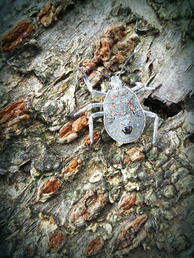 Nature Tree Insect Growth Stinkbug Larvae