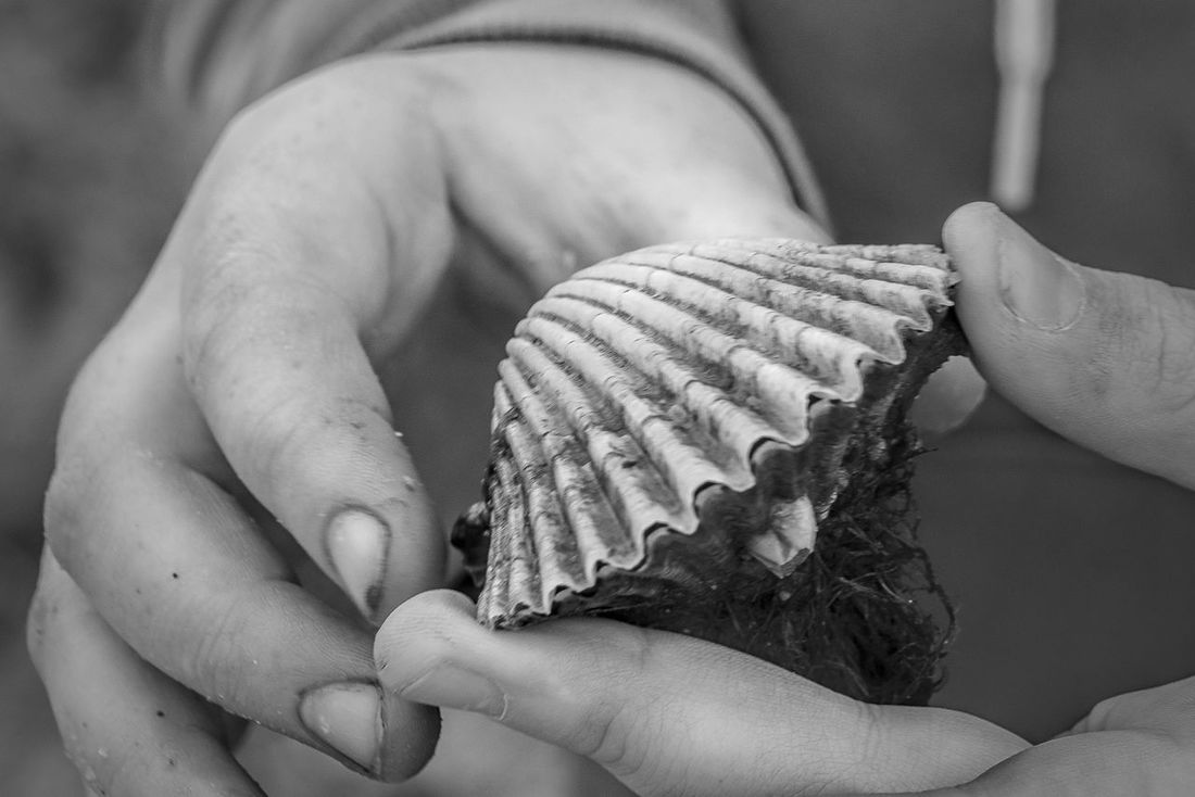 Shell Hunting Beach Clam Shell Close-up Focus On Foreground Hands Holding Shell Human Hand Real People Sea Life Shell Sony 35mm 1.8 Sony A6000 Wrightsville Beach NC Live For The Story