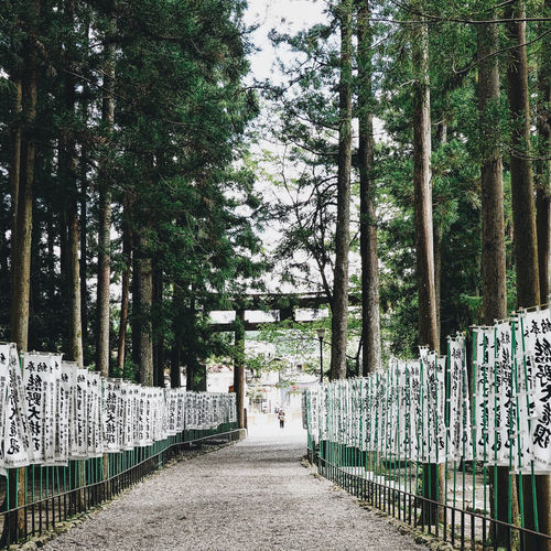 City Japan Japan Photography Japanese  Japanese Culture Japanese Temple Life Lifestyle Beauty In Nature Cultures Day Komuno Kodo Komunokodo Lifestyles Nature No People Outdoors Railing Sanctuary  Street Street Photography Streetphotography Tree Tree Trunk Walkway