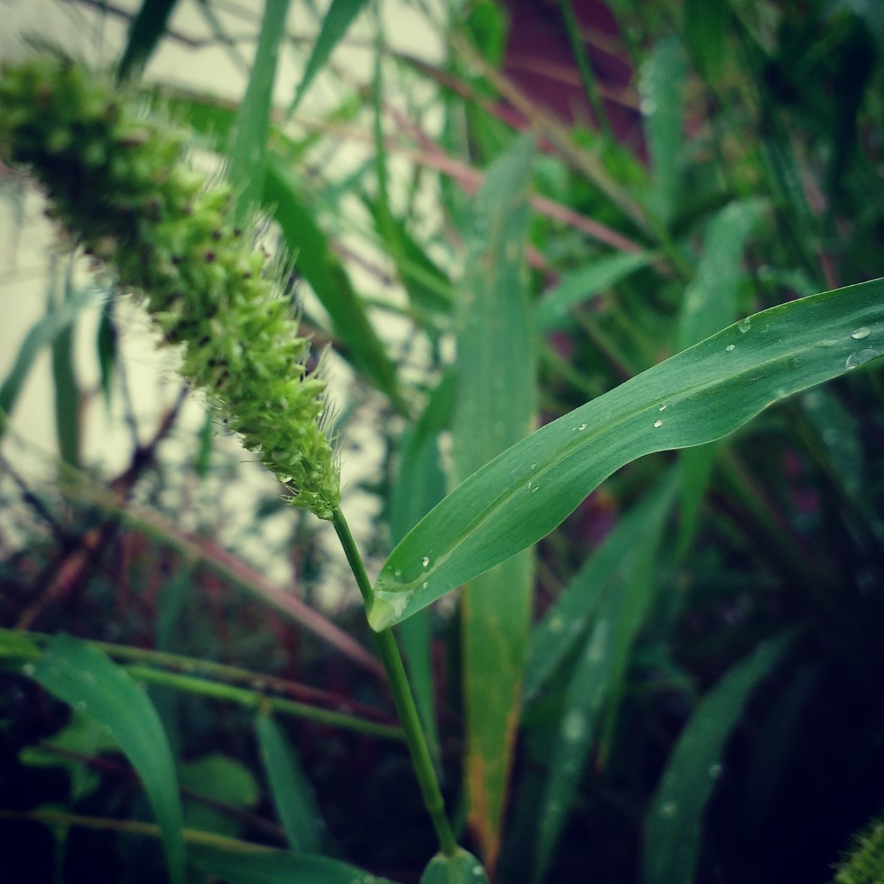 green color, leaf, growth, plant, nature, close-up, no people, day, focus on foreground, outdoors, grass, beauty in nature, drop, freshness, water, fragility