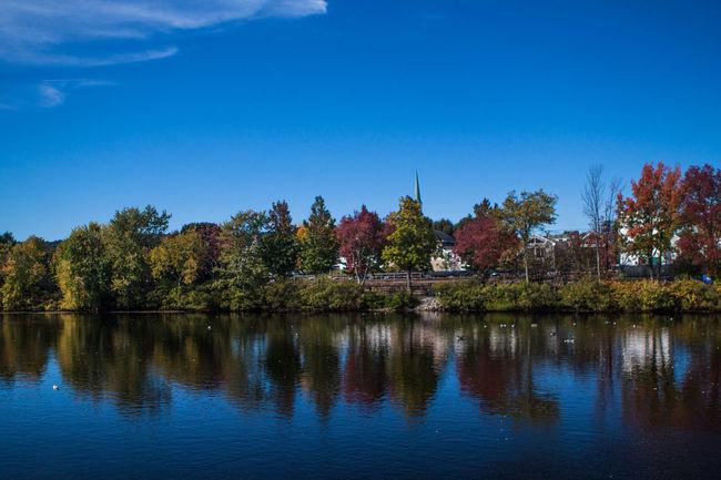 Waltham, MA fall season Autumn Beauty In Nature Blue Boston Day Fall Growth Massachusetts Nature Nature No People Outdoors Scenics Sky The 2016 EyeEm Awards Tranquility Tree Waltham