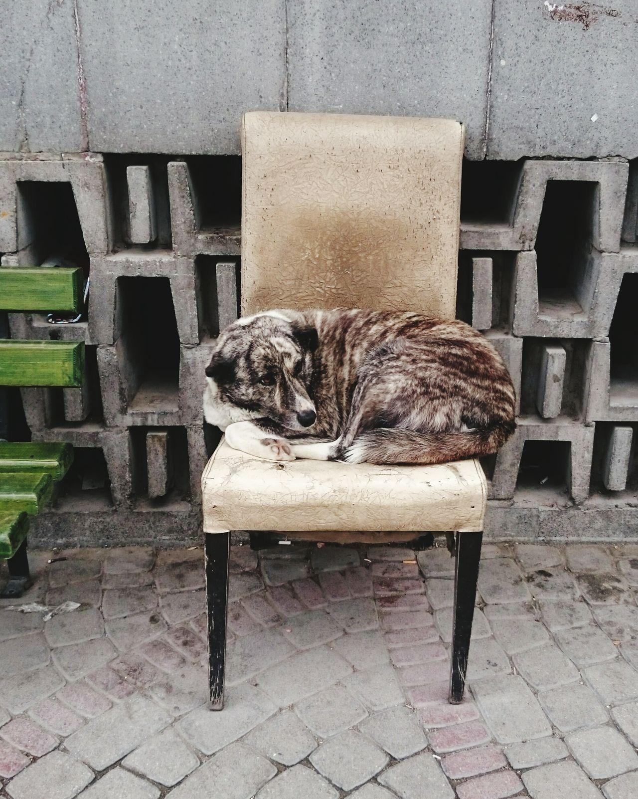 Dog Dogs Sleeping Sleeping Dog Chair Hund Hunde Liebe ♡ Dog Love Dog❤ Perro