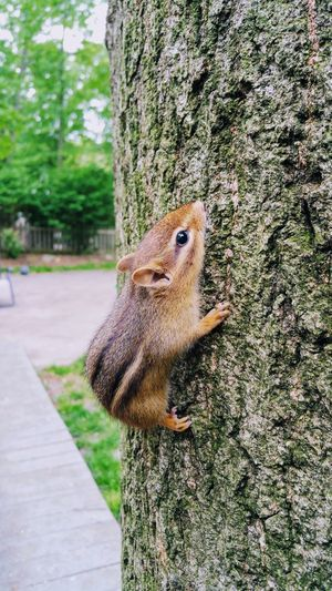 Close-up Chipmunk One Animal Animal Wildlife Animal Themes Animals In The Wild Day Tree Outdoors