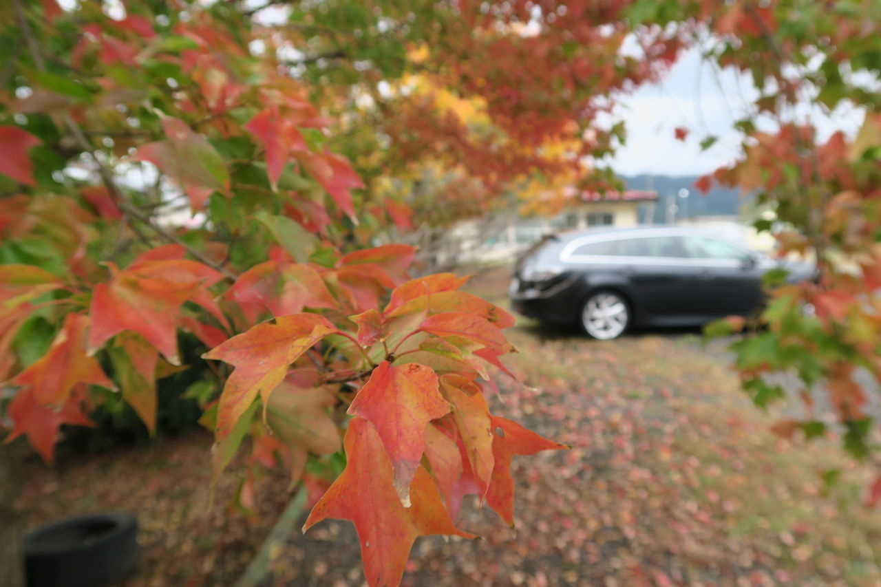 Autumn Leaf Car Nature Maple Leaf Outdoors Tree Beauty In Nature Japan Mazda マツダ Mazda6 アテンザ