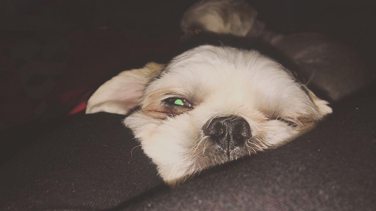 Wink wink First Eyeem Photo Cute Pets Animals Show It Off Wink
