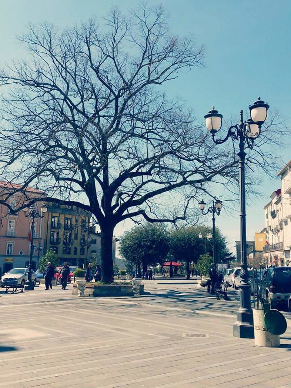 street light, bare tree, street, tree, architecture, road, outdoors, building exterior, city, built structure, clear sky, sky, day, no people