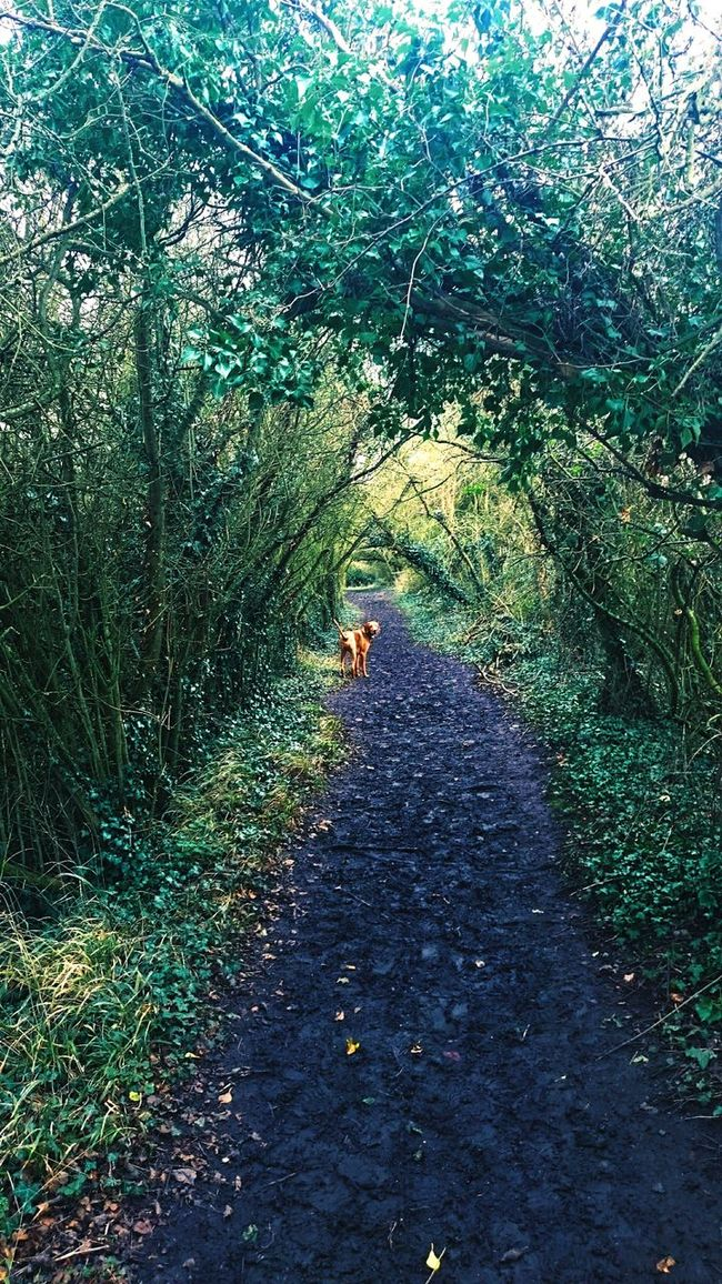 Morning walks. Dogstagram Forest Photography First Eyeem Photo