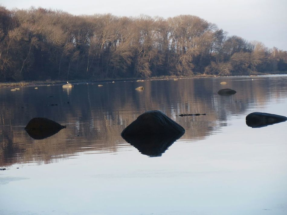Reflections Water Reflections Stones & Water Coastline Forest Stones Still Waters