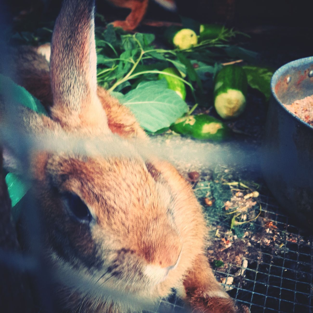 Rabbit Mr Rabbit Goodmorning Have A Nice Day♥ :)