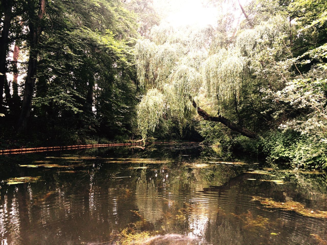 tree, nature, reflection, forest, tranquility, growth, no people, beauty in nature, water, lake, day, scenics, outdoors