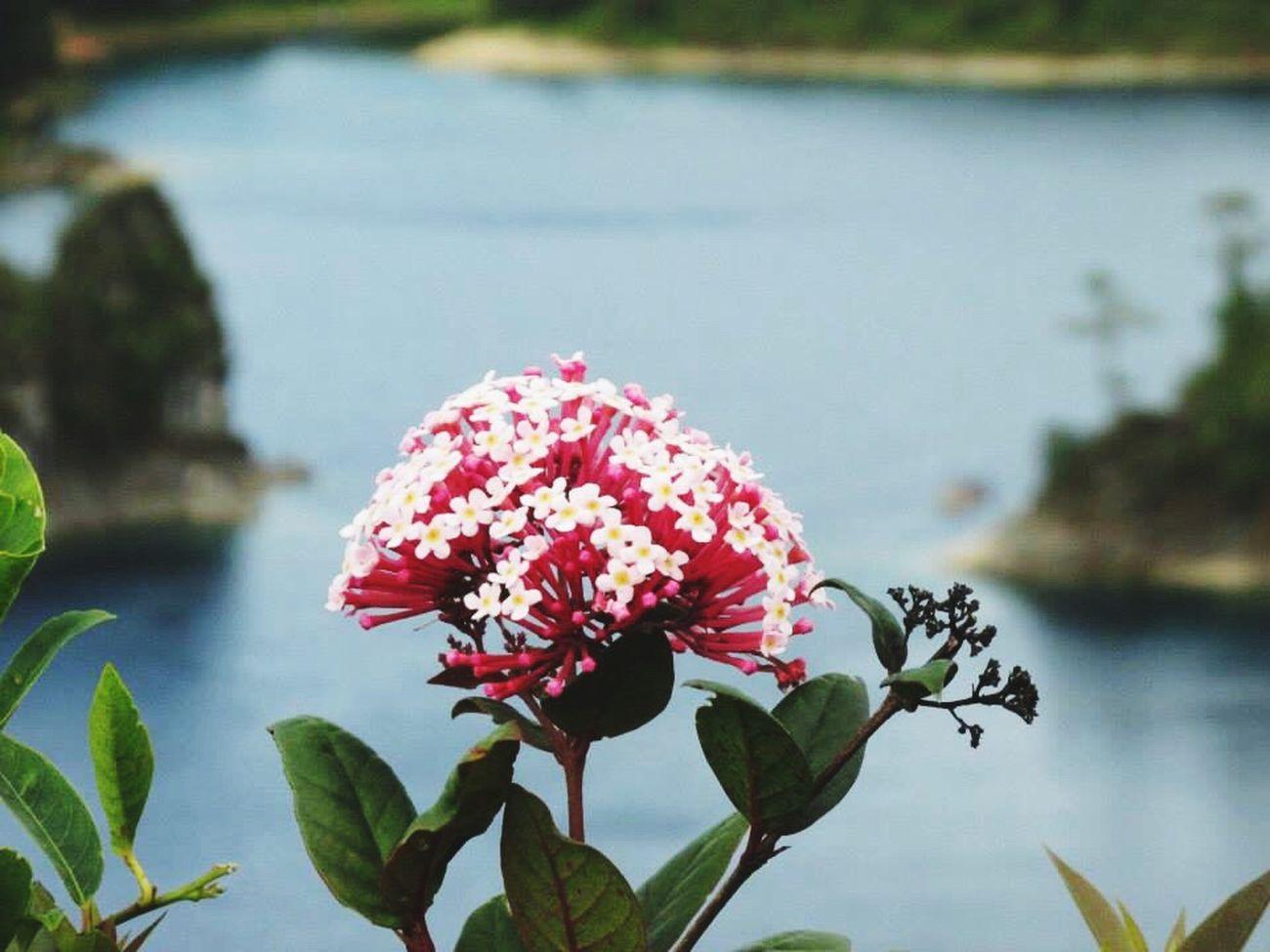 Lagunas de Montebello, Chiapas 2015,México Chiapas Green Awesome Nature Live Mexico Travel Incredible Happiness Vianeycarre Free Blue Water Flower Sky