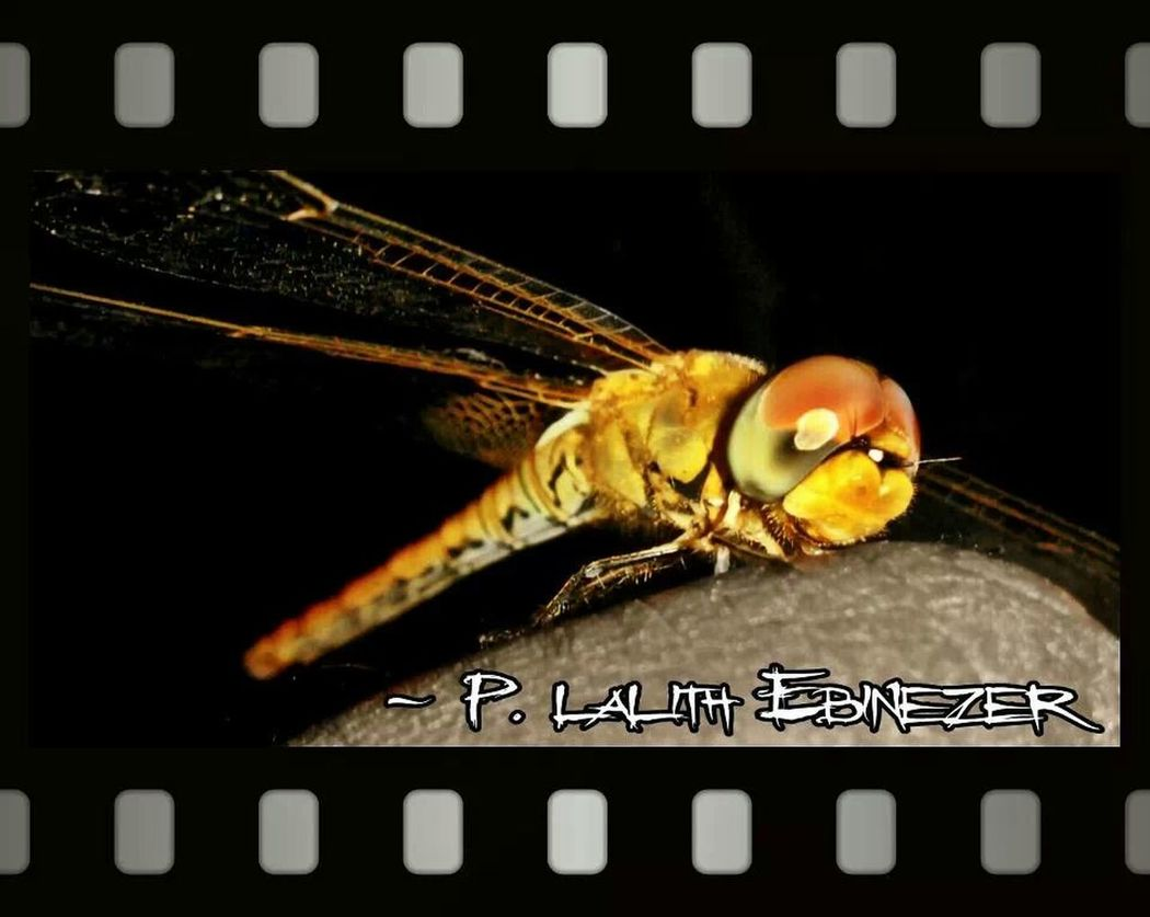 Dragonfly I Found A Dragonfly. My Dragonfly Photo