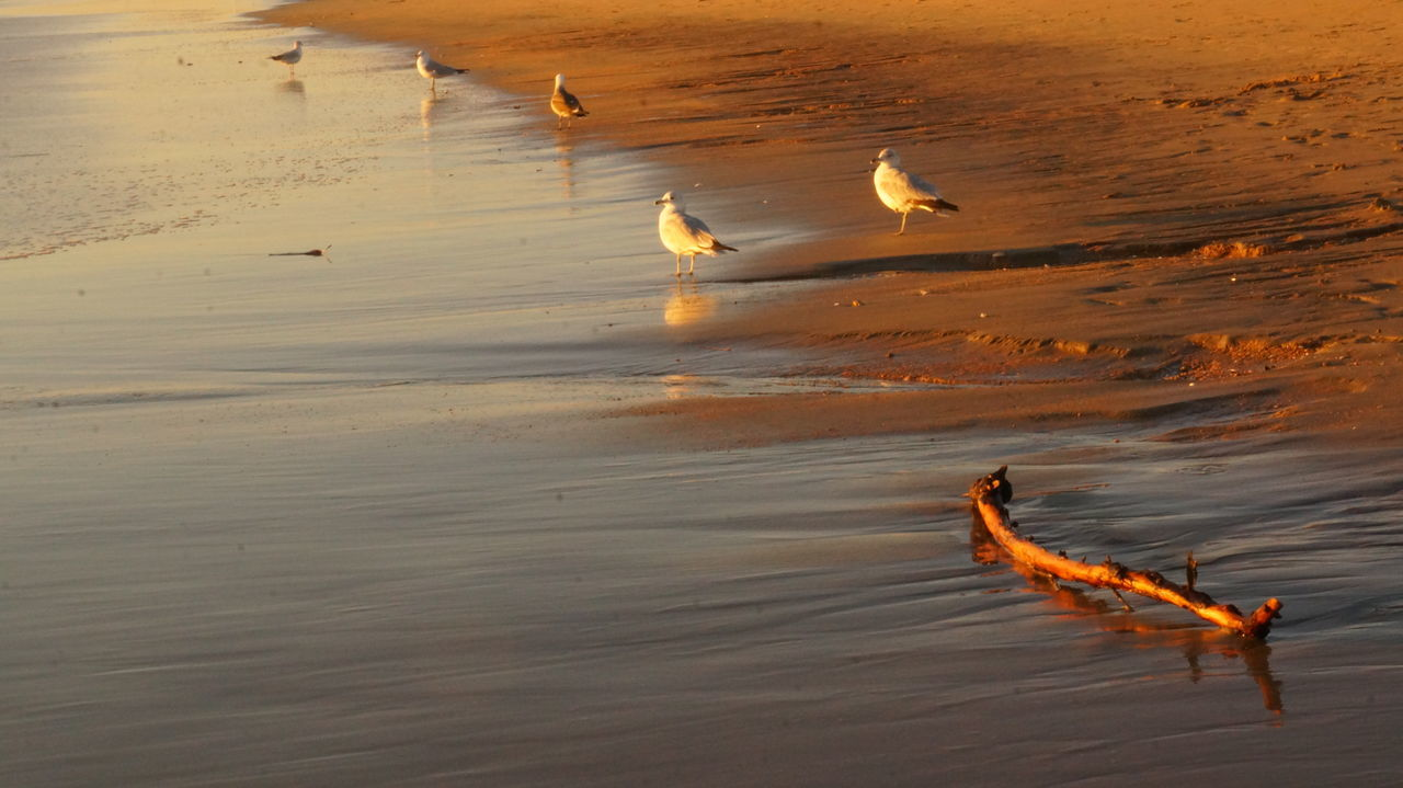 43 Golden Moments Beach California California Coast Coastline Drift Wood  Escapism Pastel Power Golden Hour Nature Outdoors Sand Sea Seagull Seagulls And Sea Shore So Cal Stick Summer Sunning Sunset Beach, CA The KIOMI Collection Water Wet Wood