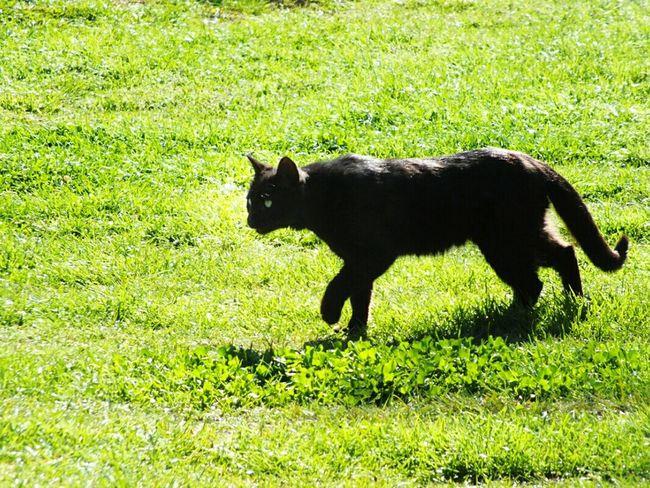 Smellycat , Smellycat 😸 Green Harmony Green Eyes Green Grass Green Green Green!  Park Melat Mellat Park پارک ملت تهران پارک_ملت