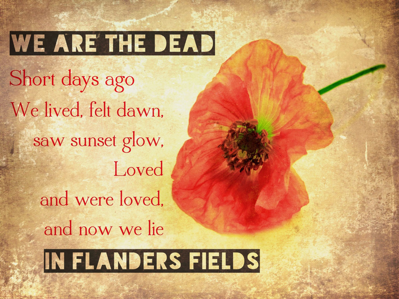 The Somme-100 years. The poem was written by Major John McCrae after the death of a friend at Ypres, another bloody battlefield of the Great War. Still a poem that makes the soldiers human no matter which battle. Death Flower Flower Head Never Forget Poppy Poppy Flowers Red Remember Remembering Remembrance Text The Great War War World War 1 Lestweforget