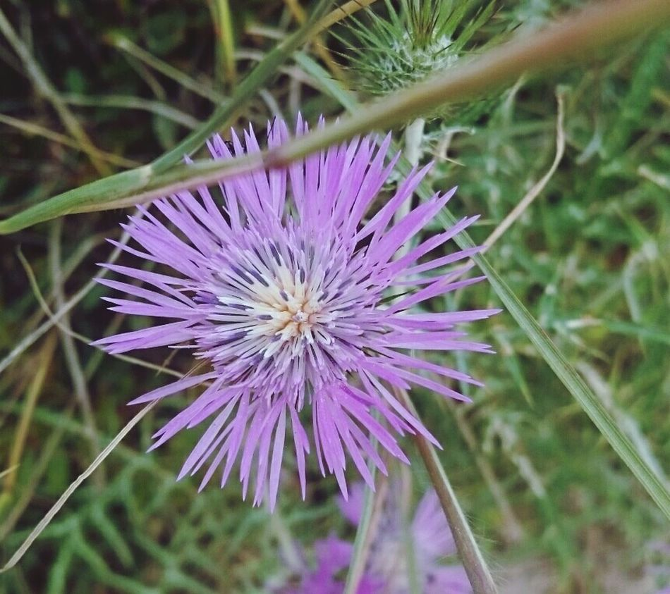 Summer Flowers Summer Memories 🌄 On Holiday
