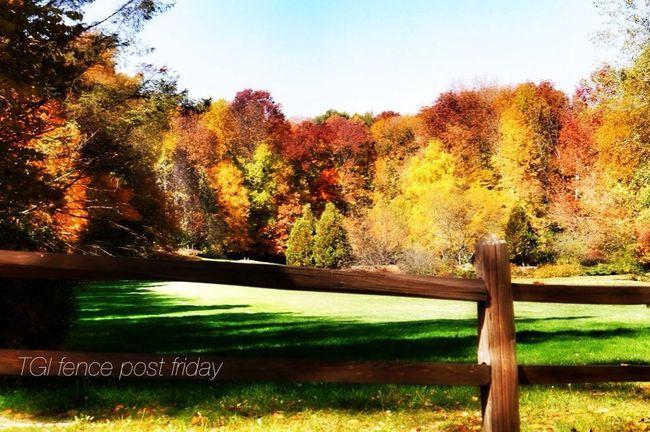 My first post to TGI Fence Post Friday Nikon Nature Autumn