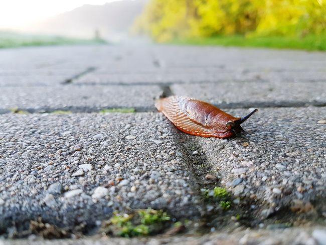 Animals Animal Photography Snail Snail Collection Biology Taking Photos Visualvibes Morningvibes Capture