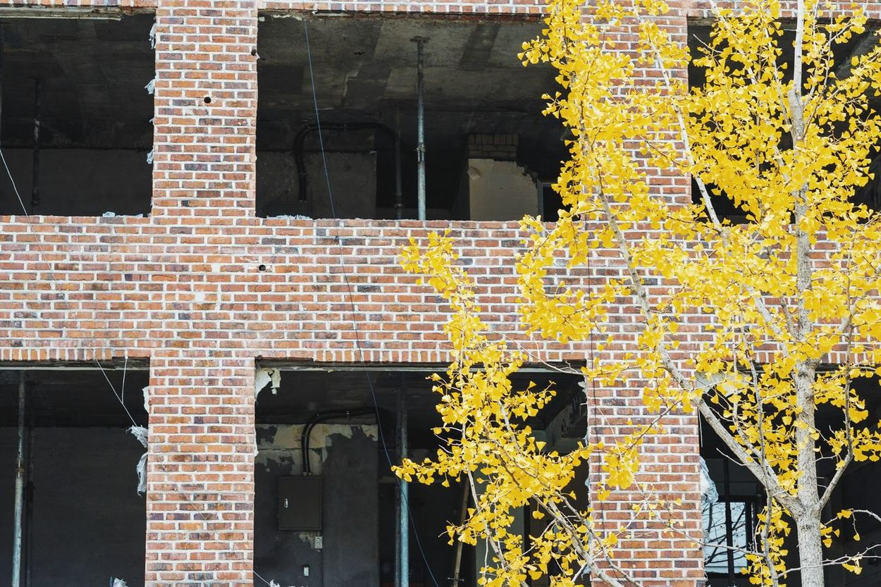 abandonded office building in hongdae Hongdae Abandoned Buildings Abandoned Places Abandoned Gingko Tree Yellow Gingko Tree