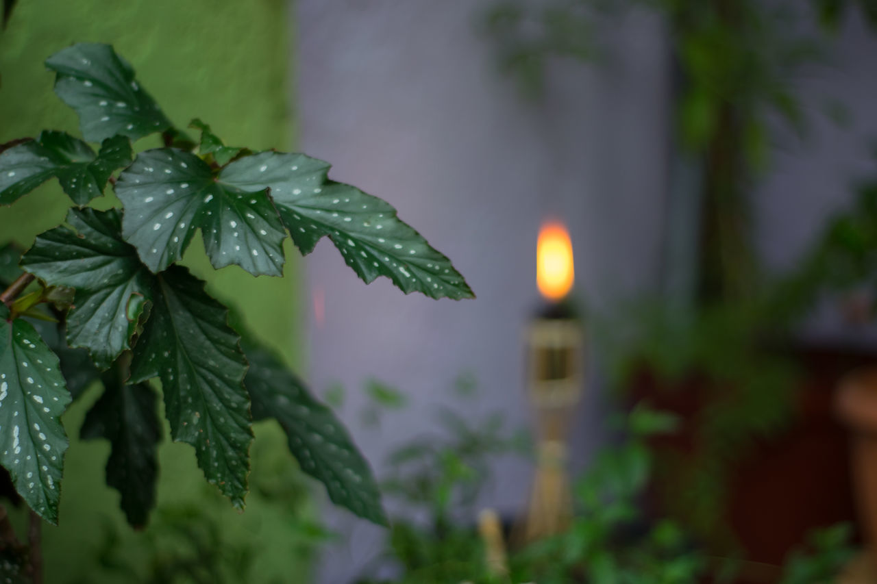 Close-up D3300 Garden Photography Nikonphotography No People Outdoors Summertime Torchlight