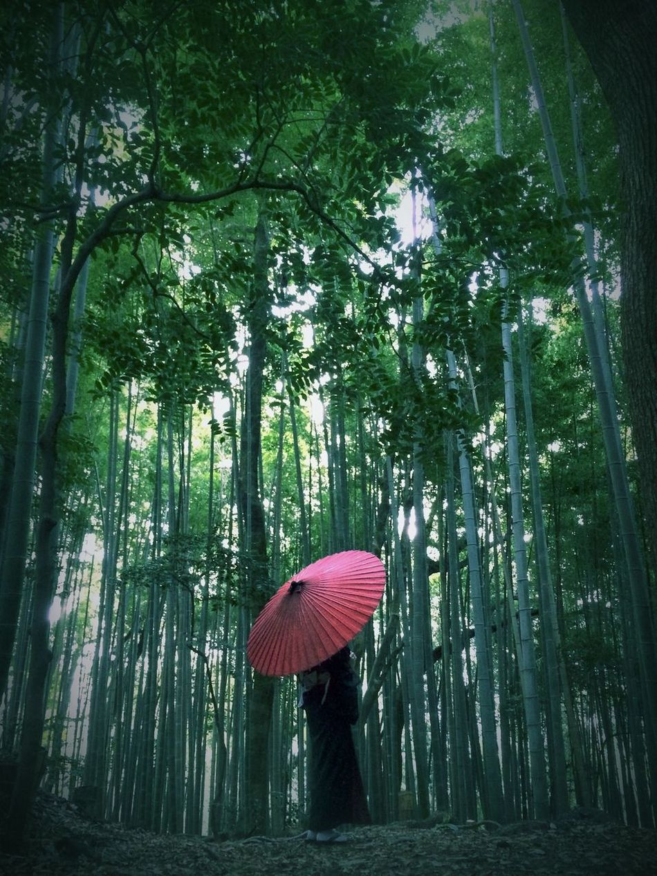 Beautiful stock photos of tokyo, Adult, Day, Escapism, Forest