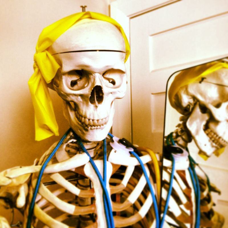 Physio Therapy Close-up Day Gold Colored Human Bone Human Representation Human Skeleton Human Skull Indoors  Physiotherapy