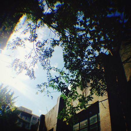 School Tree Love It