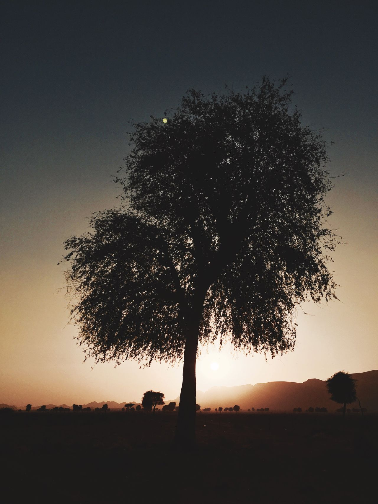 Tree Nature Sunset Beauty In Nature Tranquil Scene No People Tranquility Scenics Landscape Outdoors Sky Growth Silhouette Lone Single Tree Isolated Day