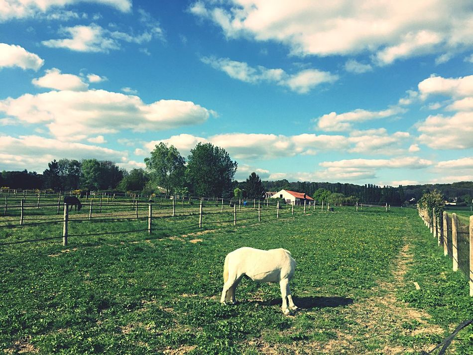 Horse with no head Cloud - Sky Sky Animal Themes Mammal Domestic Animals Field Grazing Livestock Nature Grass No People Landscape Day Agriculture Outdoors Tree Tranquility Rural Scene Beauty In Nature