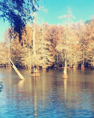 Mississippi beauty Water Tree Nature Beauty In Nature Outdoors Tranquility Sky