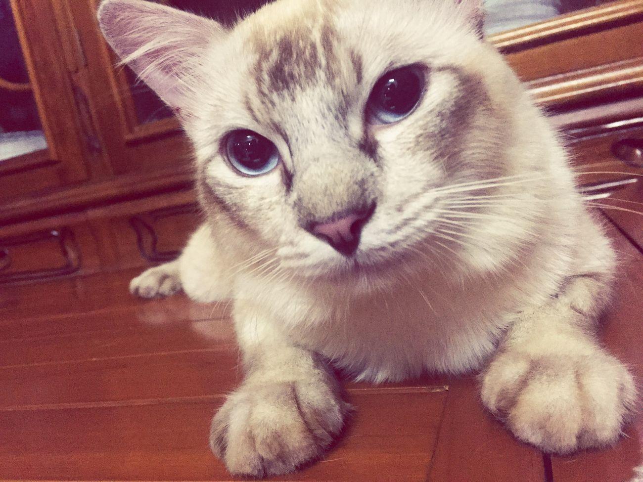 Momot The Cat