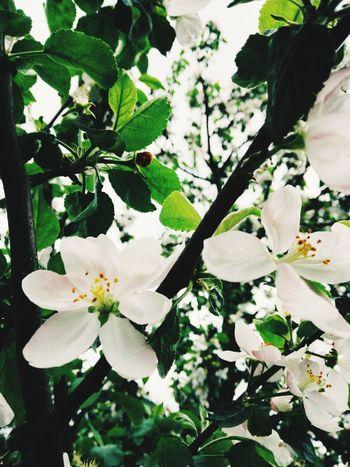 Flower Fragility Blossom Freshness Growth Beauty In Nature Springtime