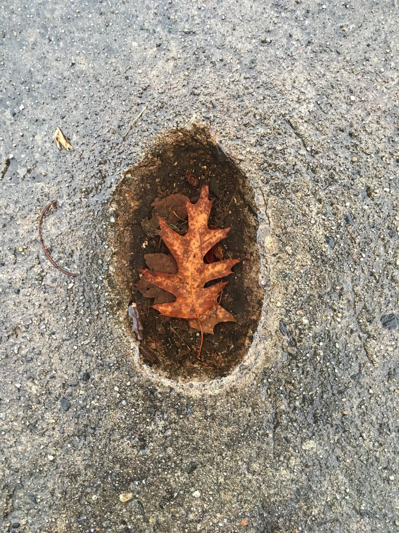 High Angle View Outdoors Day No People Asphalt Nature Close-up Leaf Water Concrete
