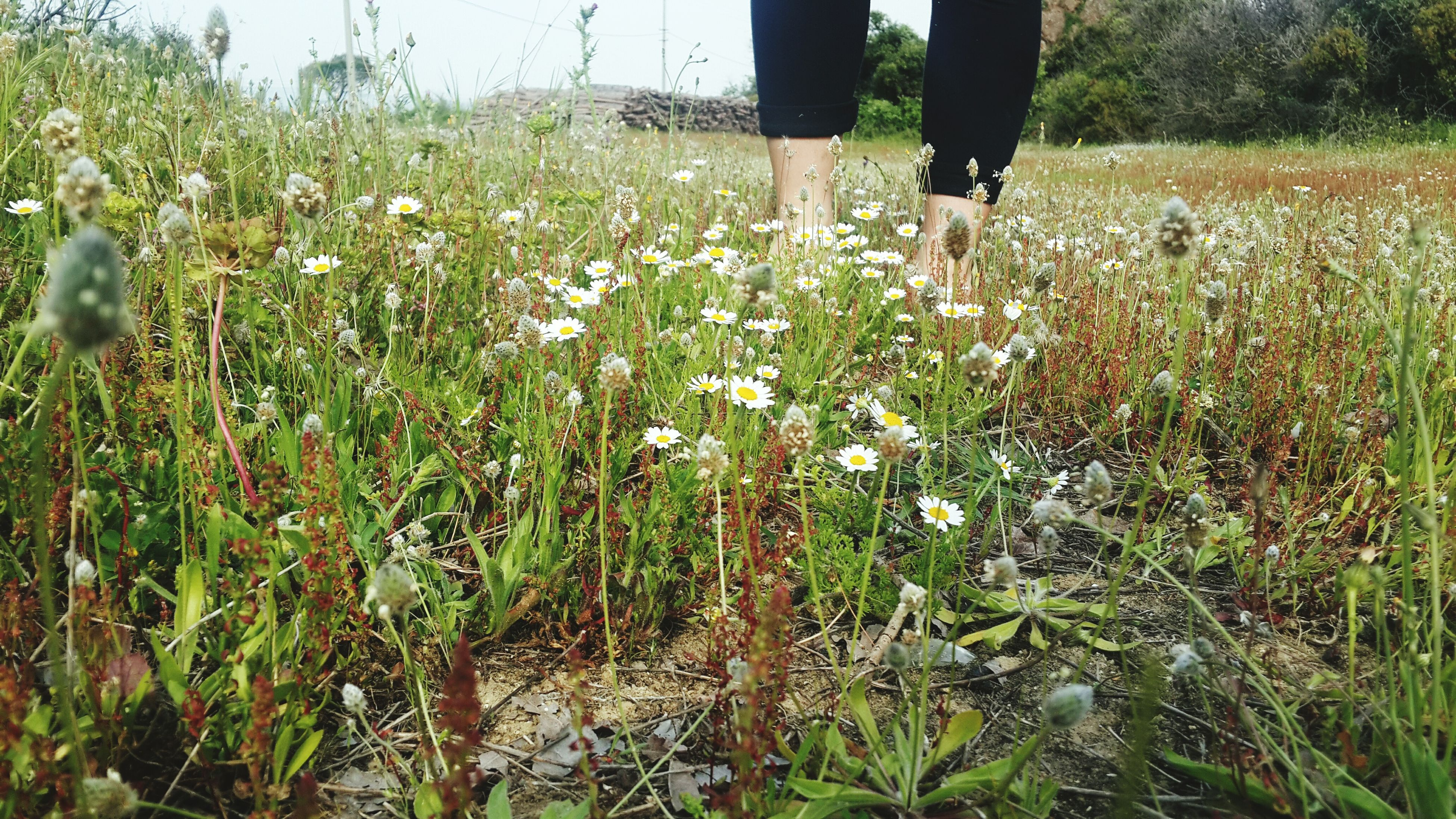 low section, growth, nature, human leg, one person, real people, field, plant, grass, flower, day, outdoors, standing, leisure activity, lifestyles, human body part, beauty in nature, freshness, people