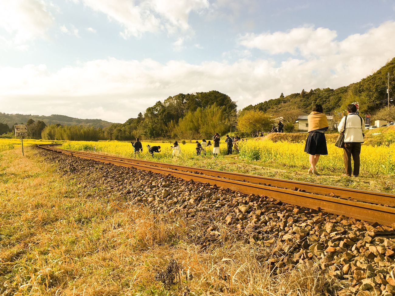 Japan 菜の花 小湊鉄道