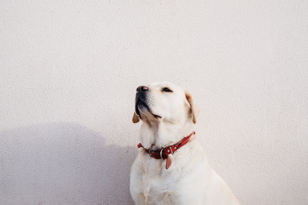 Beautiful stock photos of portugal, dog, pets, domestic animals, animal themes