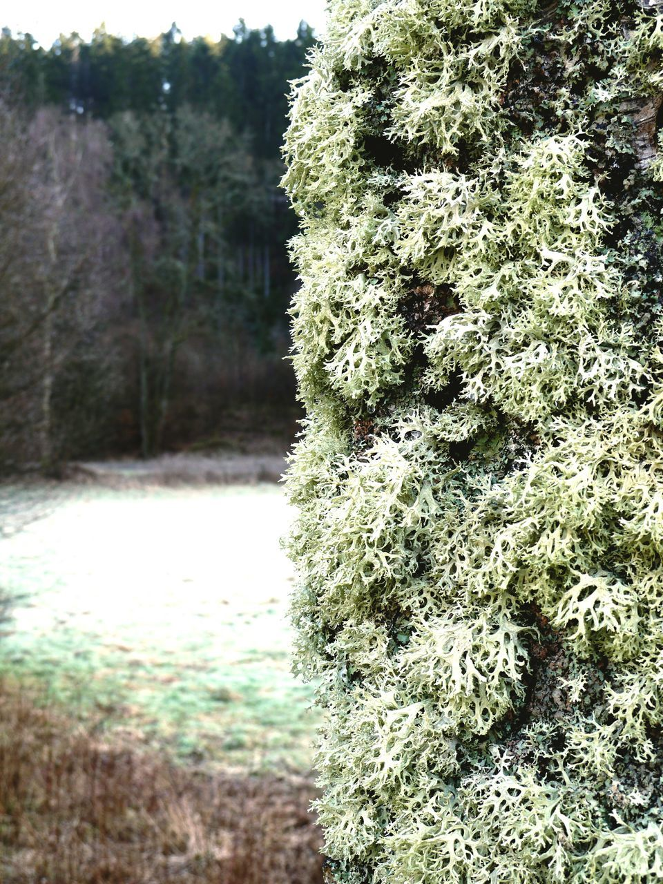 Lichen Growing On Tree Trunk In Forest