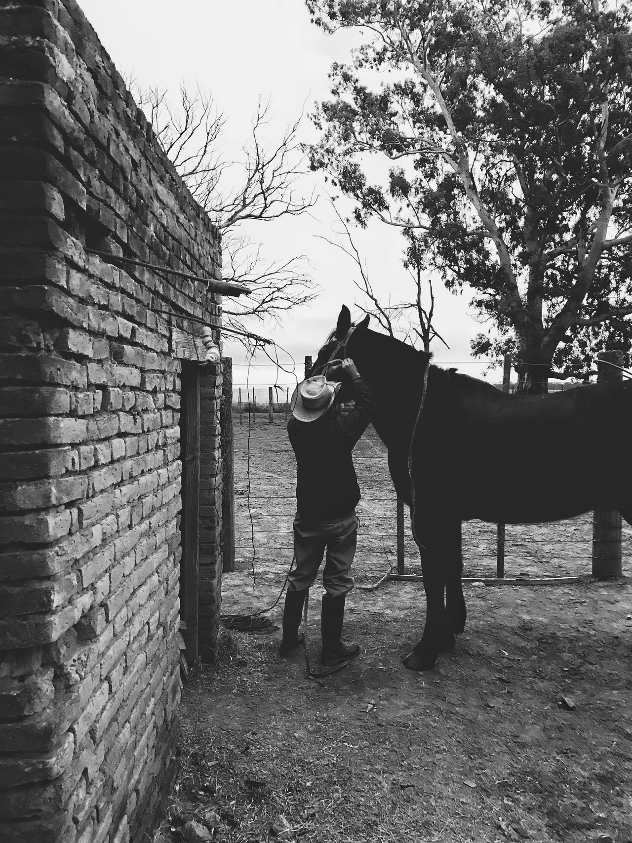 One Animal Domestic Animals Brick Wall Outdoors Day Mammal Two People Standing Full Length Men Adult People Only Men Adults Only Sky The Street Photographer - 2017 EyeEm Awards