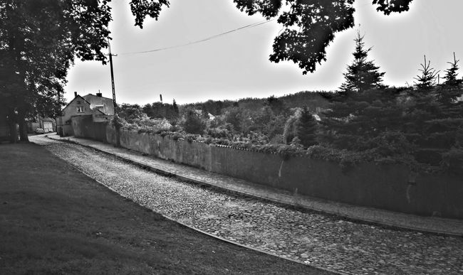 Polish village Tree Road Rural Scene The Way Forward No People Agriculture Black & White Villages Villagelife