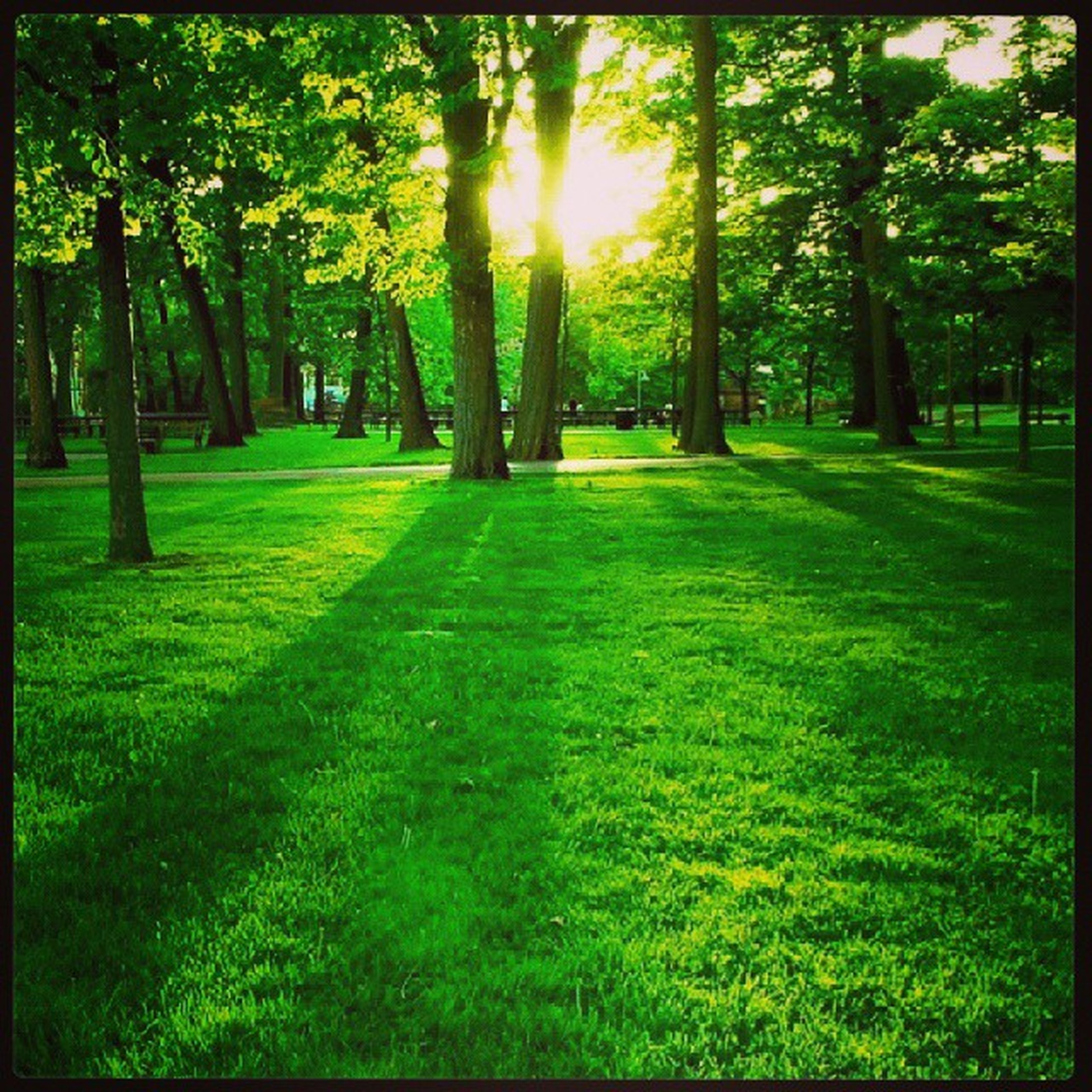 tree, grass, sunlight, green color, growth, tranquility, park - man made space, grassy, nature, tranquil scene, shadow, sunbeam, lawn, park, field, sun, transfer print, beauty in nature, tree trunk, scenics