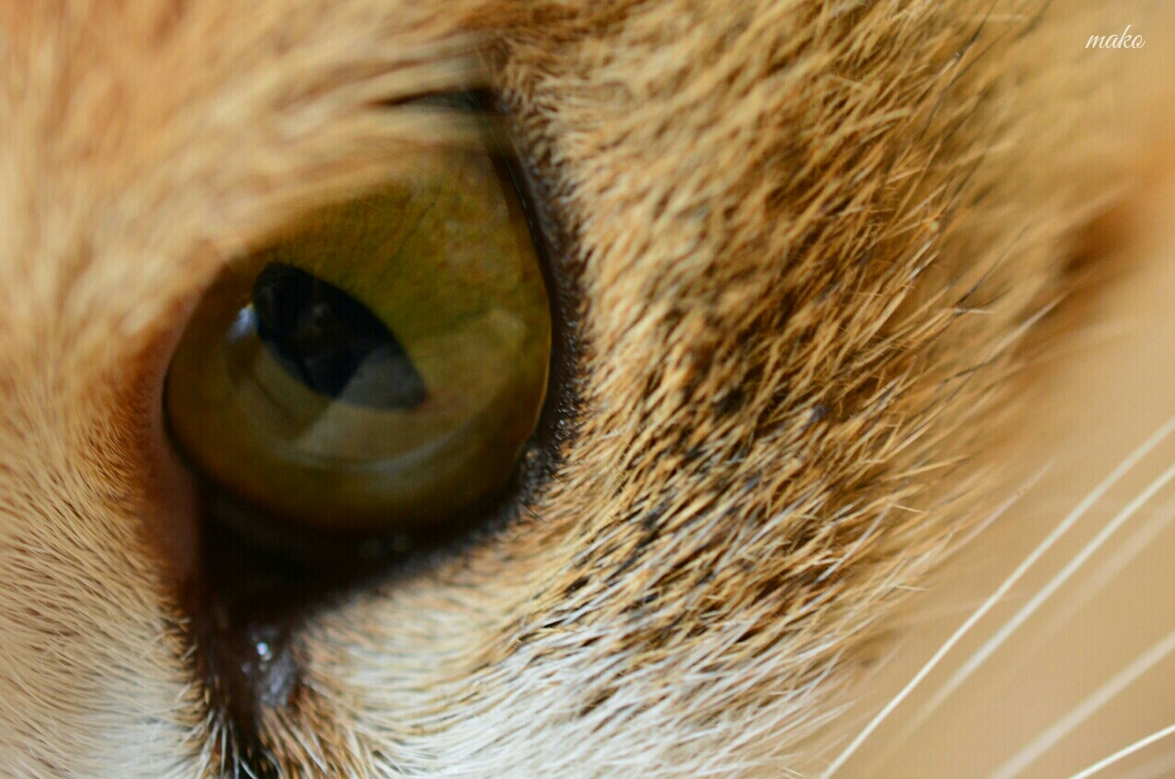 one animal, close-up, animal themes, animal body part, domestic animals, part of, pets, animal eye, animal head, indoors, extreme close-up, full frame, extreme close up, detail, mammal, selective focus, cat, animal hair, domestic cat, backgrounds