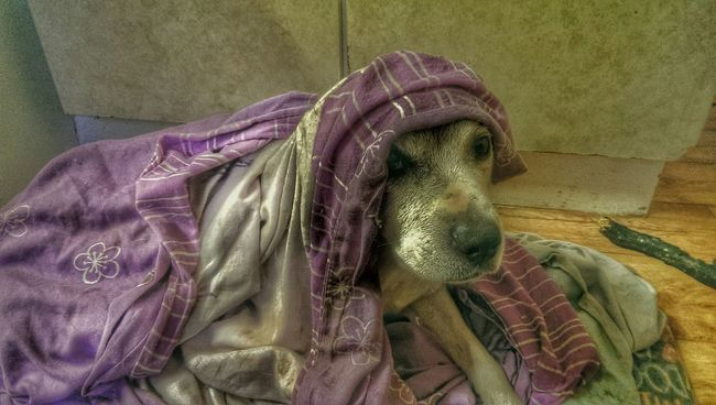 Dog❤ Old Dog Wimpymornings Hello Old Timer Hiding From The World Cold Days Taking Photos Boo