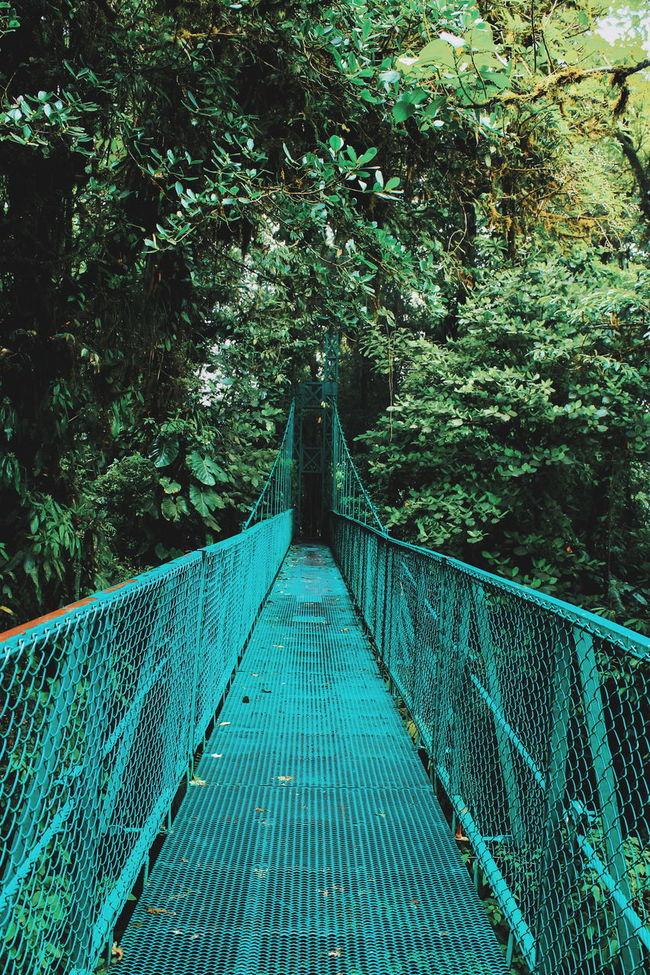 Adventure Bridge Jungle Nature Nature Photography Nature_collection Path Russia Rustic Tranquility Travel Travel Photography Traveling